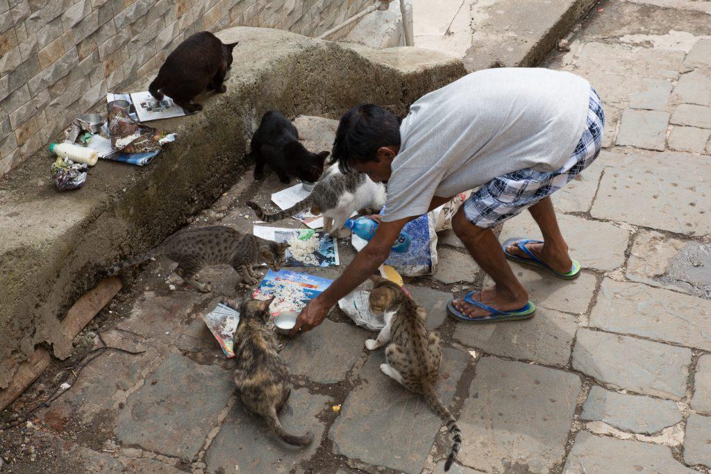 Feeding cats daily at BaanGanga, Mumbai. ©robertmoses