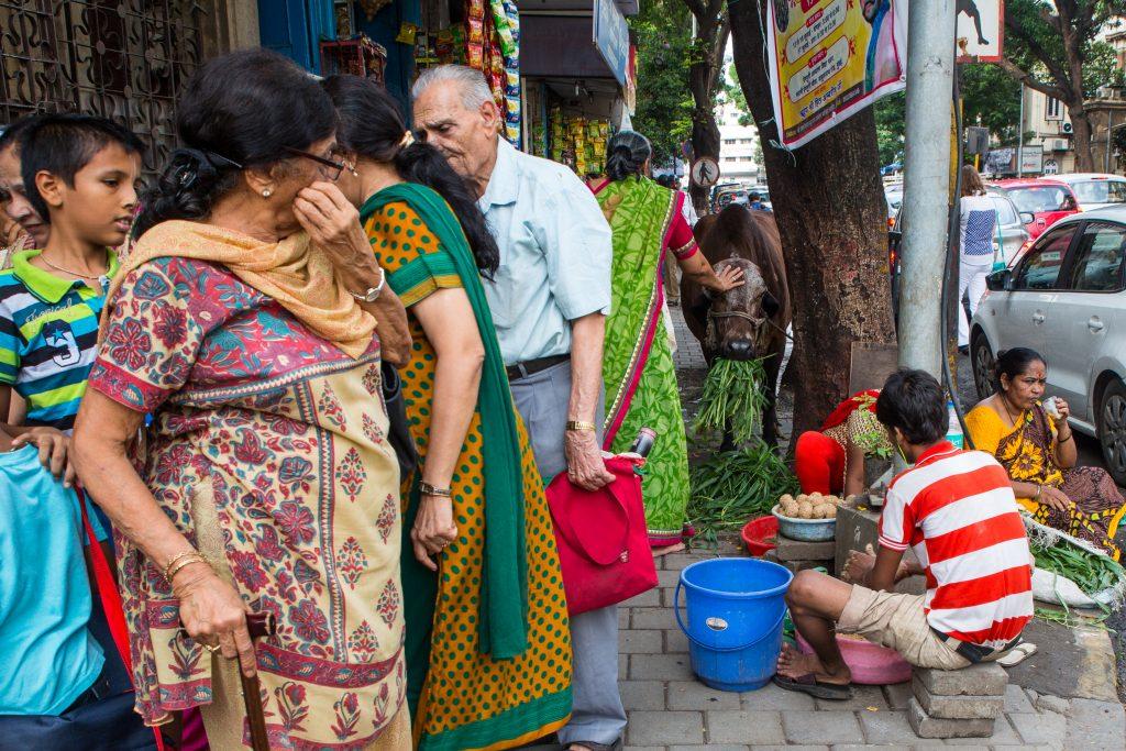 Woman devotee feeds and pats a cow after having worshipped at Shri Dwarikadhish Mandir, Girgaum, Chowpatty, Mumbai. ©robertmoses
